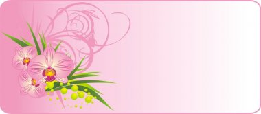 Bouquet of orchids. Summer composition