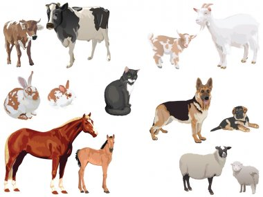 Domestic animals1