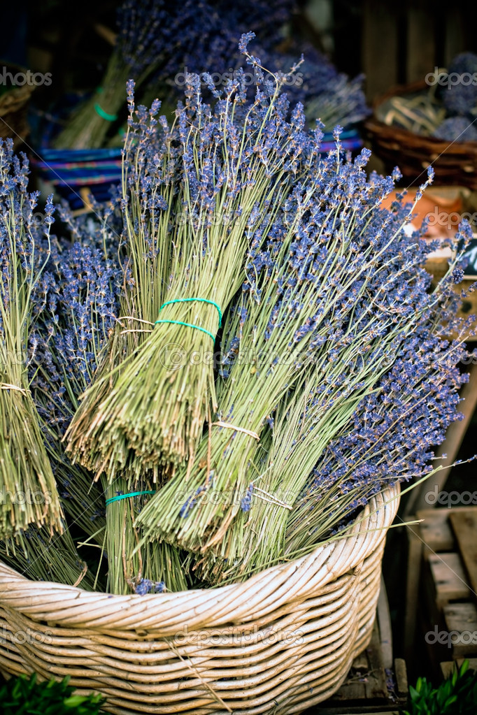 Dry Lavender Bunches