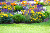 Buntes Blumenbeet auf dem Rasen