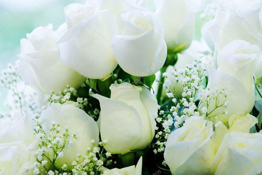 очень фото на тему шикарные белые розы природа