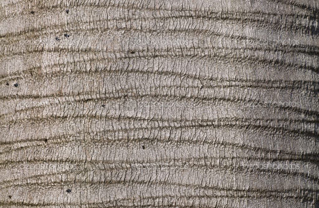 Palm bark texture.