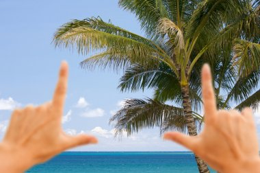 Hands Framing Palm Tropical Trees