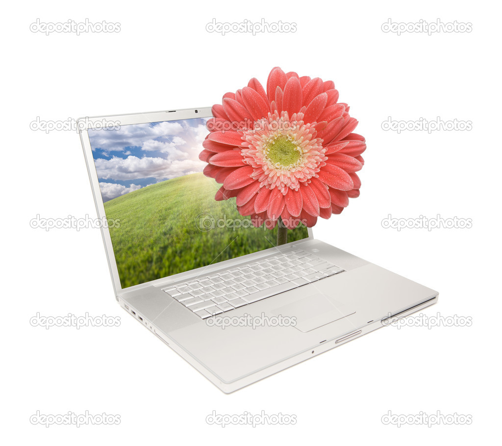 Laptop Isolated with Gerber Daisy