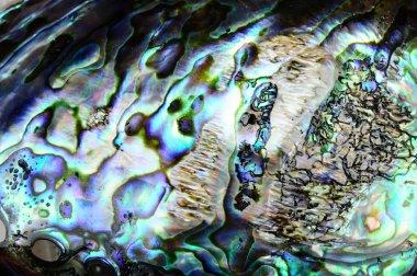 Paua shell background