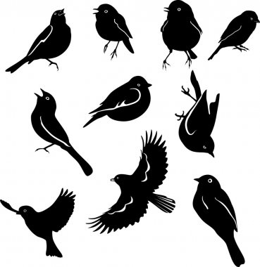 Birds a set