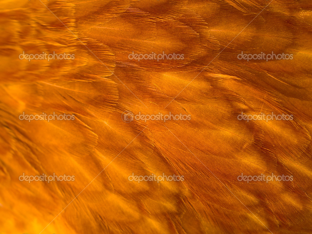 Feather Background Texture