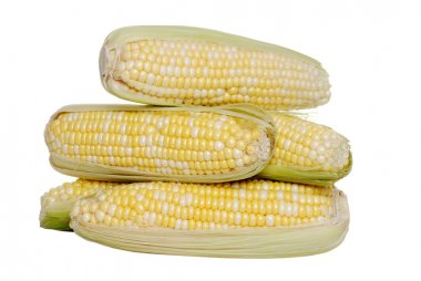 Isolated pile of sweet corn
