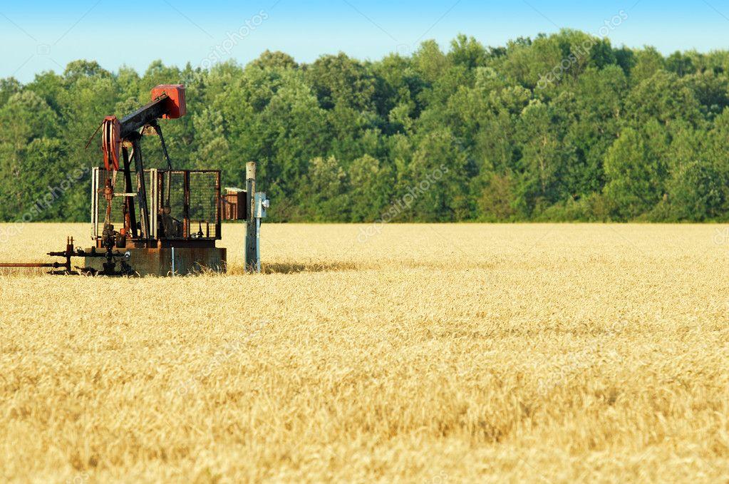 Oil pump in a wheat field