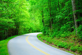 Fotografie Straße durch den Wald