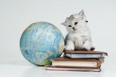 Kitten, Books And Globe