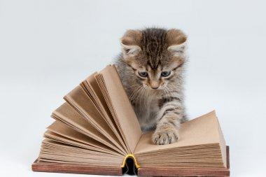 Little Kitten And Old Book