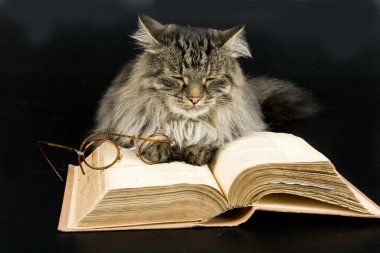 Cat, Book and Glasses