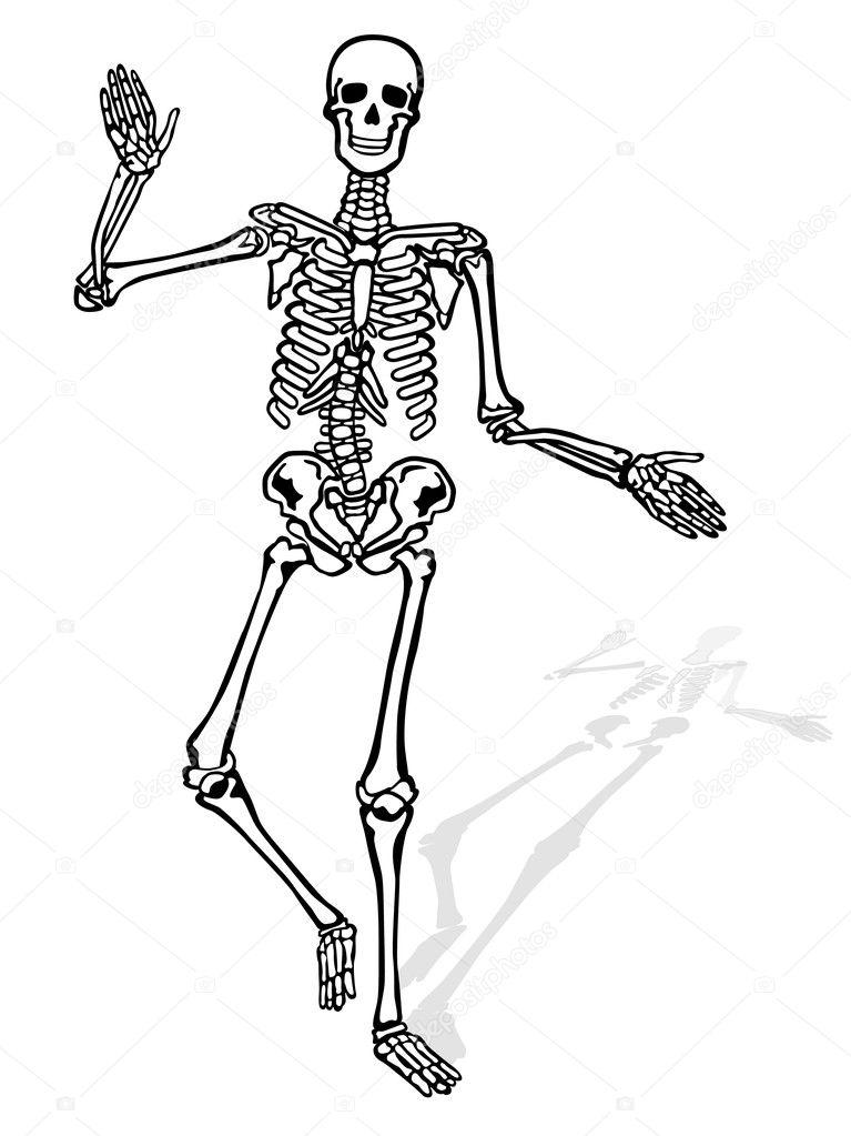 Hip Skeleton Stock Vector Scusi0 9 2949322