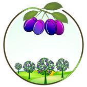 Photo Plum cultivation