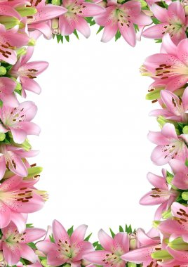 Frame of pink lilies on a white background stock vector