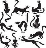 Fotografia gatto nero