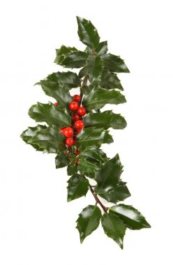 Perfect Sprig of Holly