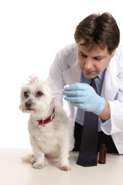 Vet treating a pet dog