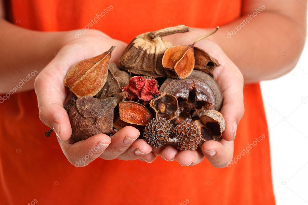 Handful of fragrant bush potpourri