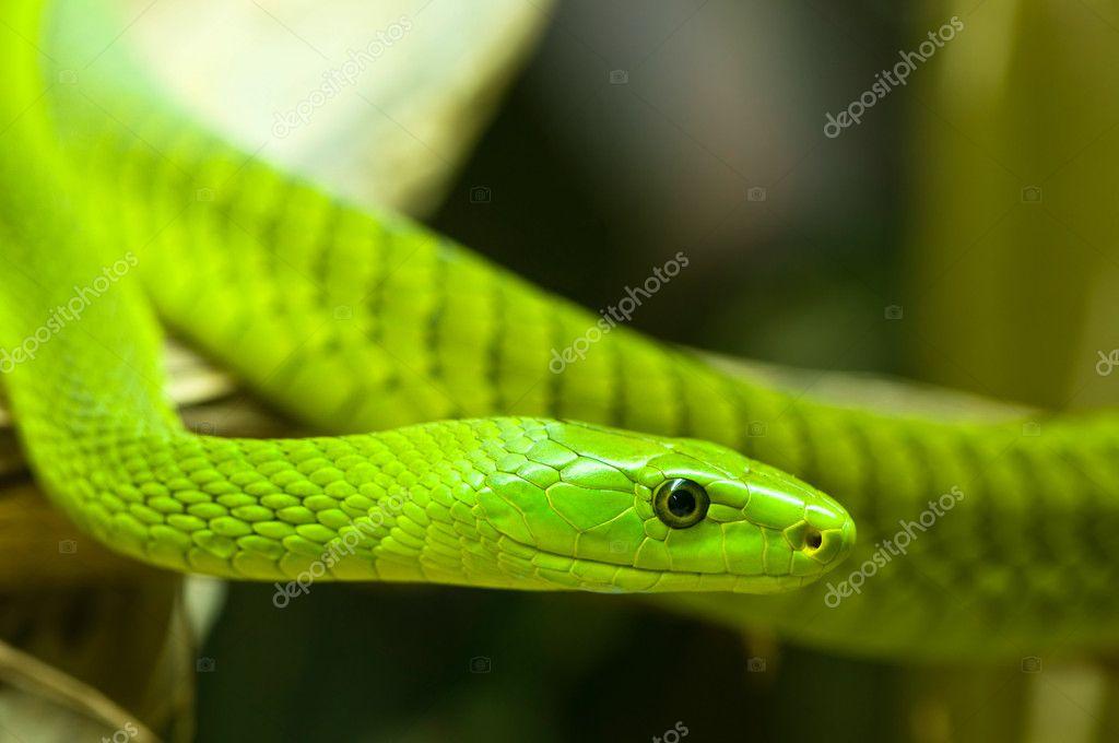 Green mamba 2