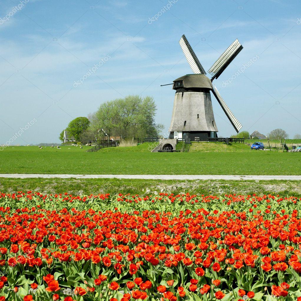 windmill in netherlands u2014 stock photo phb cz 2731955