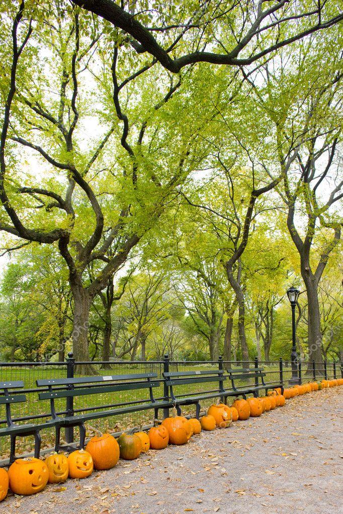 Autumnal Central Park, New York City, USA stock vector