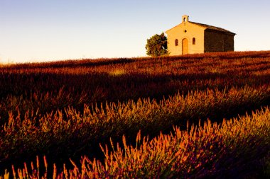 Chapel with lavender field
