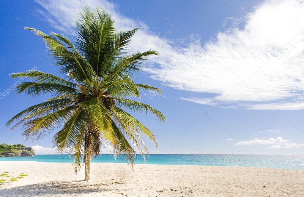 Фотообои Barbados