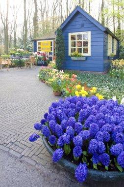 Keukenhof Gardens, Lisse, Netherlands stock vector
