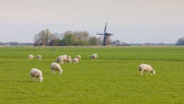 Windmill , Netherlands