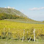 Zřícenina hradu devicky s vinicí, Česká republika