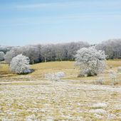 Fotografie Nature in winter, D