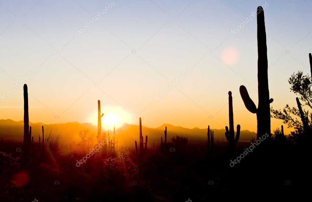 Sunset in Saguaro National Park, Arizona, USA