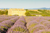 Chapel with lavender field in Provence