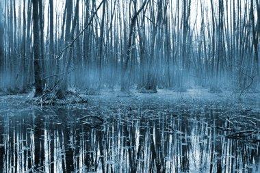 Misty forest om bog