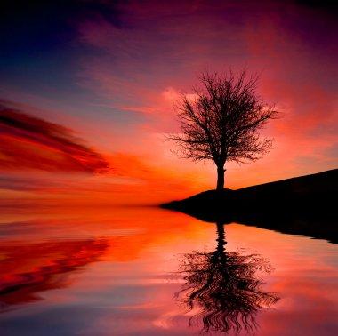 Tree on susnet