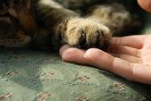 kočičí pracku na lidské ruce