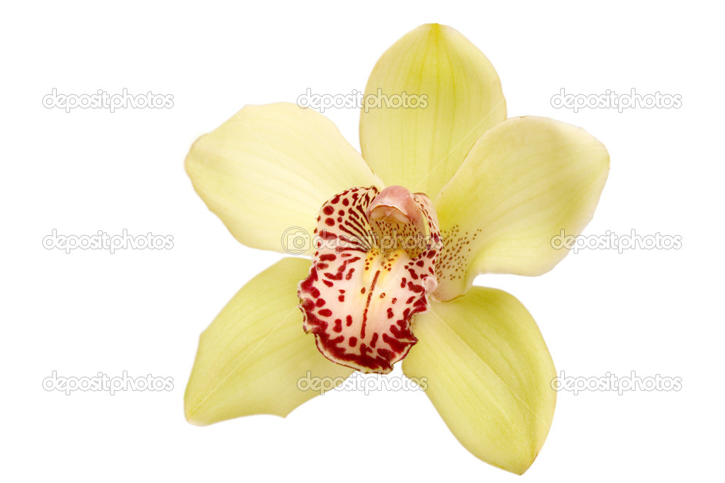 Closeup of yellow orchid