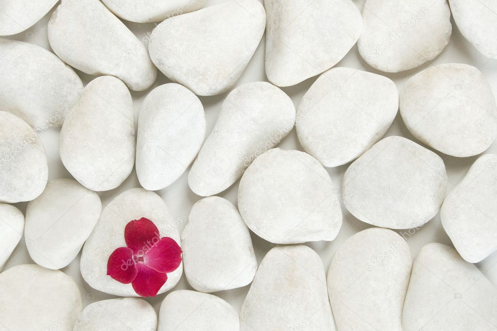 Red petals on white pebble background