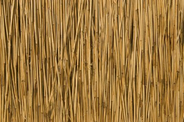 Texture of cane dry