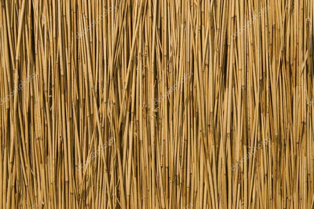 Texture Of Cane Dry Stock Photo 169 Victoro 3710222