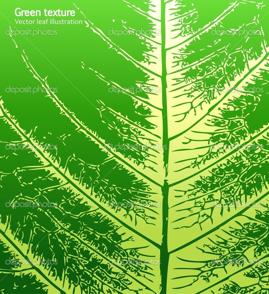 Leaf of a plant close up. Vector
