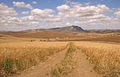 Photo Farmhouse in a cornfield