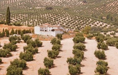 Spanish farmhouse in olive groves