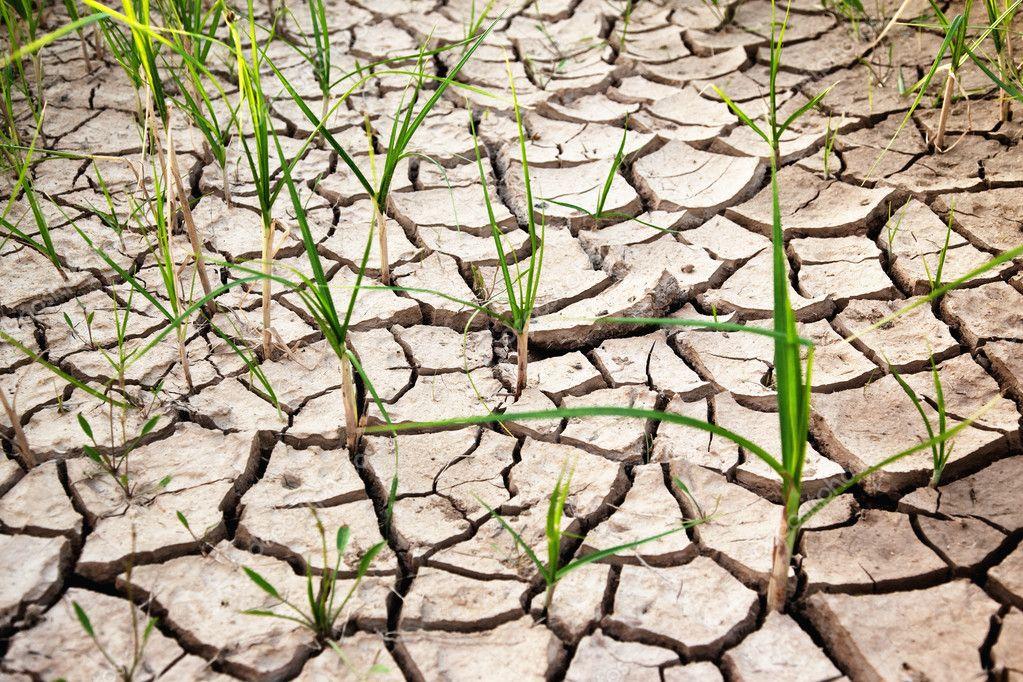 New life in dry desert