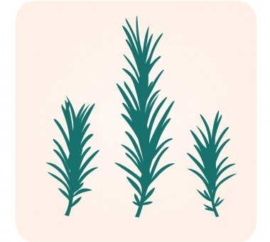 Rosemary herb silhouette
