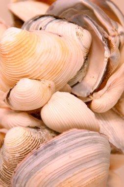 Seashells in the Glass