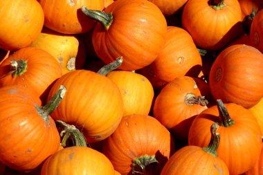 Up Close - Mini Pumpkins