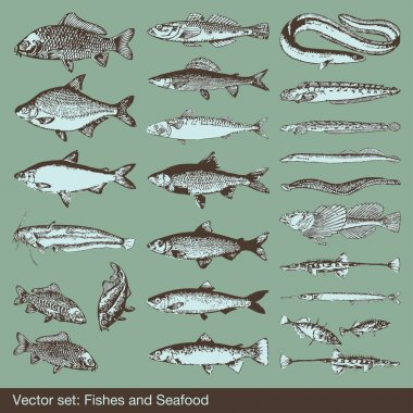 Fish vector set background